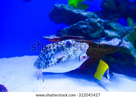 tropical sea fish