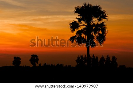 tropical sugar palm trees in silhouette morning. northeast of thailand