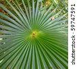 Tropical vegetation in the Virgin Islands National Park on St John (USVI) - stock photo