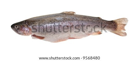 trout, gutted and scaled, isolated on white