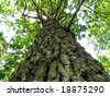 Trunk of tree - stock photo