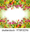 Tulips background with free space for your text - stock photo