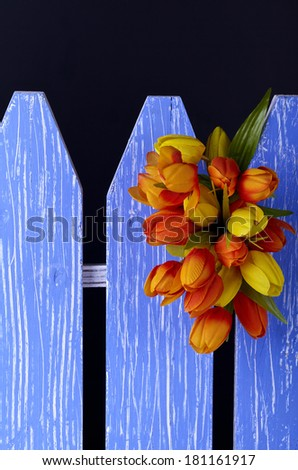 Tulips on decorative fence,black background