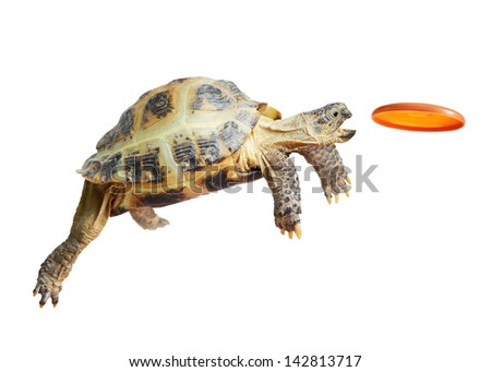 Turtle jumps and catches
