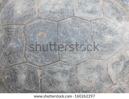 Sea Turtle Shell Turtle Shell Texture
