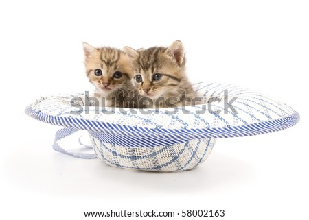 Two adorable kittens sitting in a hat (isolated on white)