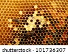 two bees on honeycomb - stock photo