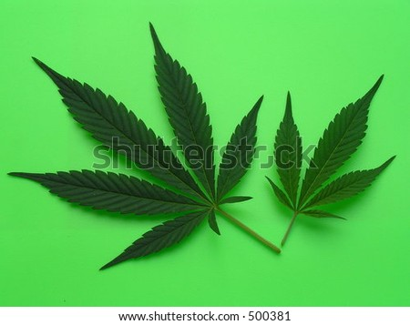 two cannabis leafs