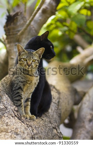 Two cats, black and stripped