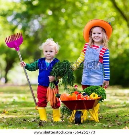 two children picking fresh vegetables on organic bio farm kids gardening and farming autumn