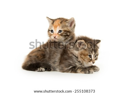 Two cute baby kittens on white background