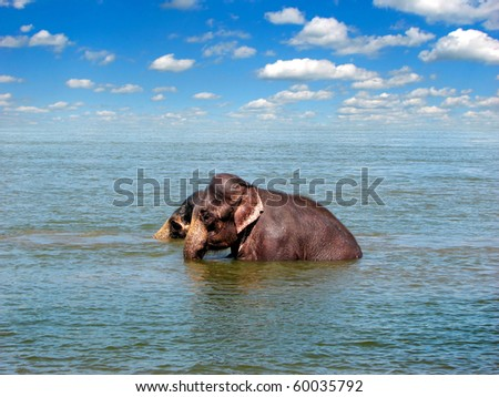 two elephants in the sea