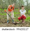 Two female gardeners planting tree outdoor in spring - stock photo