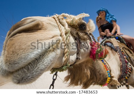 how to ride a camel with two humps
