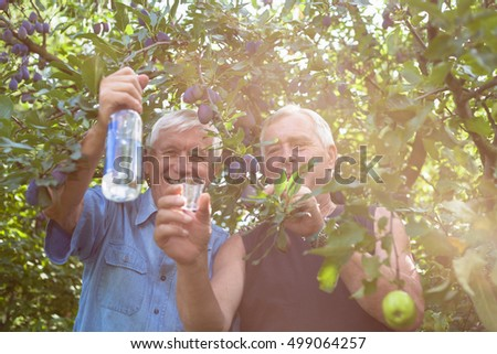 Two happy seniors with bottle of alcohol enjoying sunny day outdoors under fruit trees.