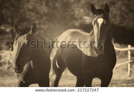 Two horses standing outdoors, retro photo effect