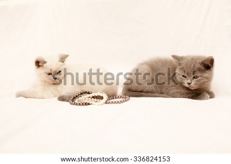Two kittens looking at pearls on white background