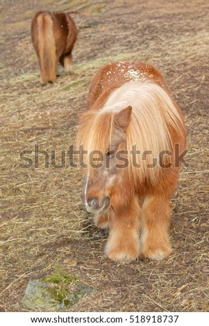 Two long haired cute pony