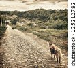 two mongrel dogs stay on old road - stock photo