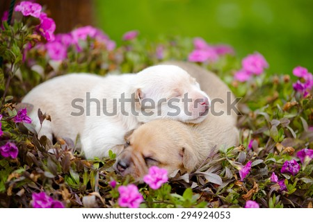 two newborn puppies lying in flowers