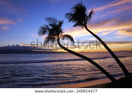 Two palm trees in tropical sunset