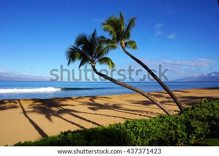 Two palm trees, Maui, Hawaii
