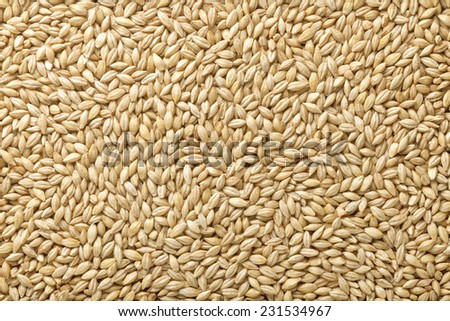 Two-row barley  with husks