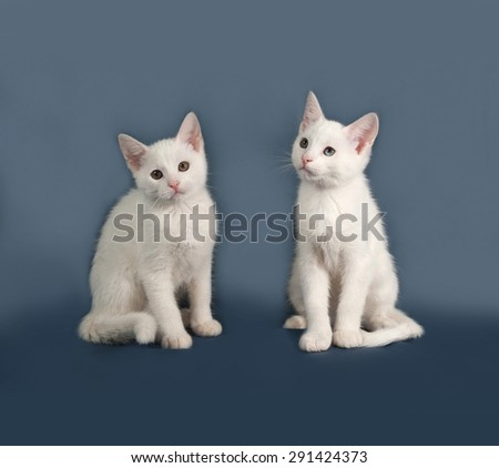 Two small white kitten sitting on gray background