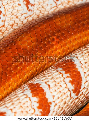 two snakes skin. Scales of red and white