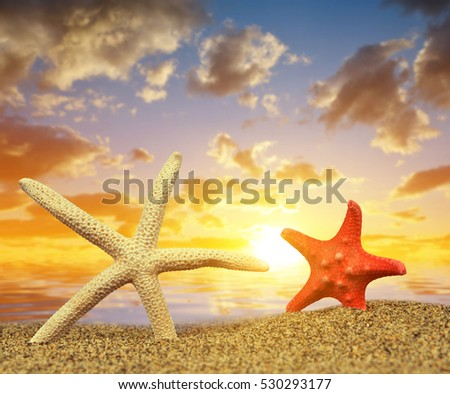 Two starfish on sandy beach at sunset.