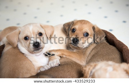 Two Terrier Mix Puppies Sleeping in Dog Bed