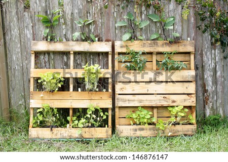 Two wooden pallets, modified slightly to grow vegetable plants.