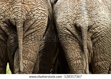 Two wrinkly elephant bums.
