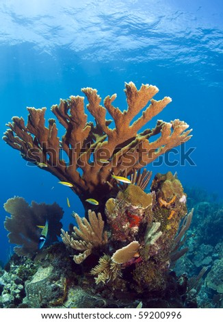 underwater coral photography  Underwater coral reef off