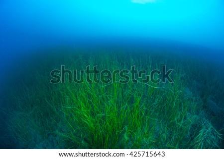 underwater fishing net stock photo 200285759 - shutterstock, Reel Combo