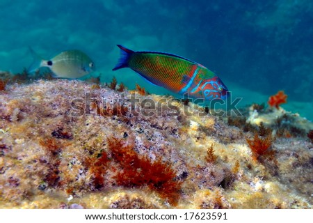 underwater image of reef and tropical fishes
