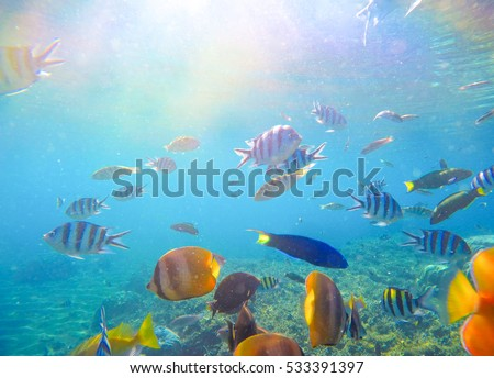 Underwater world fish plants stock illustration 309978968 shutterstock underwater landscape with tropical fish and sunlight exotic island lagoon with oceanic life coral publicscrutiny Images