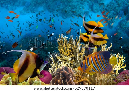 Underwater picture with great variety of fish