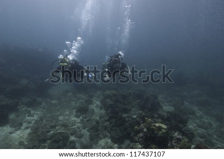 Underwater scene with scuba divers  Hard coral (Scleractinia)