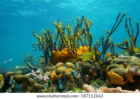 underwater coral photography  Underwater scenery with colorful marine