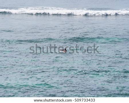 unidentified surfer paddling and surfing long wave from reef break in Bali Indonesia