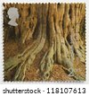 UNITED KINGDOM - CIRCA 2000: a stamp from the United Kingdom shows image of the roots of a tree, from the Millennium series, circa 2000 - stock photo