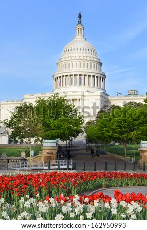 United States Capitol with red tulips foreground - Washington DC