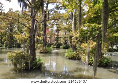 University Of Louisiana Bayou 005
