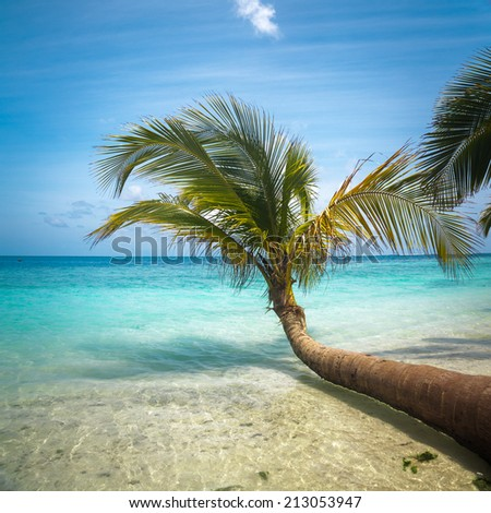 Untouched tropical beach in Maldives. outdoor shot