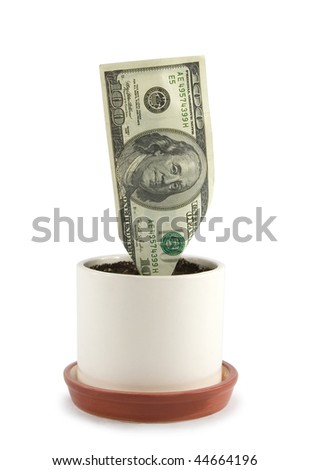 US money growing in a pot isolated