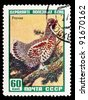 USSR - CIRCA 1957: a stamp printed by USSR shows Hazel-grouse, series guard useful birds, circa 1957 - stock photo