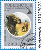 UZBEKISTAN- CIRCA 1995: A stamp printed in Uzbekistan shows Camelus ferus or Wild Bactrian Camel, series, circa 1995 - stock photo