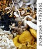 Variety of gourmet raw mushrooms - stock photo