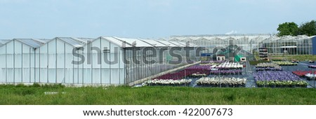 Variety of old greenhouses with flowers outside in Westland area